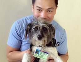 Mr. Scruffles dog visiting a patient