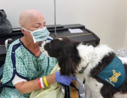 Pippin dog visiting a patient
