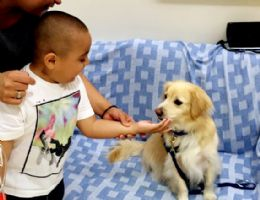 Toby dog visiting a patient